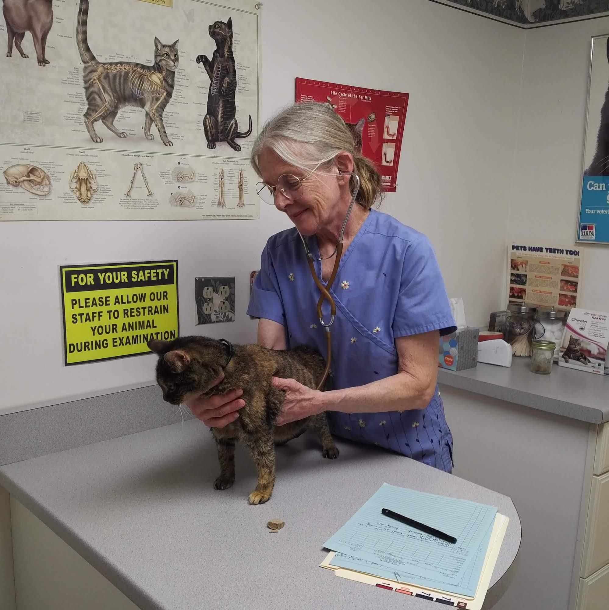 Dr. Robin Elms, Feline Veterinarian