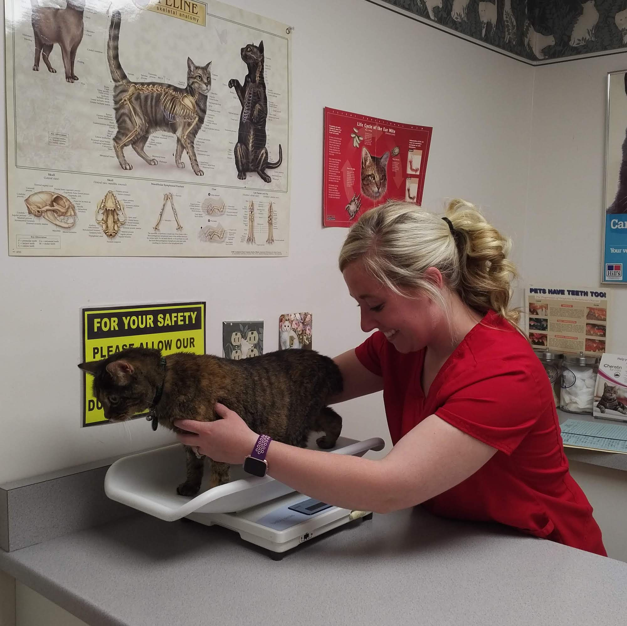 Vet tech Angie prepares Tippy for her annual wellness exam.