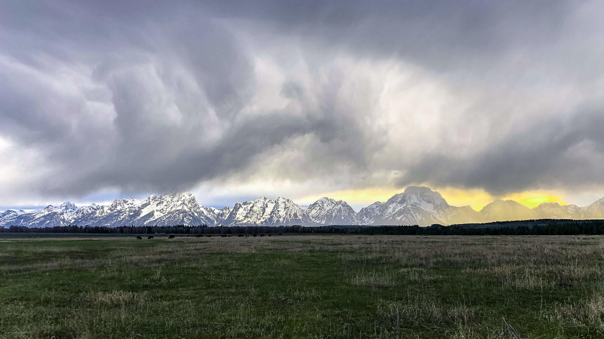 Bison herd in front of the Teton range