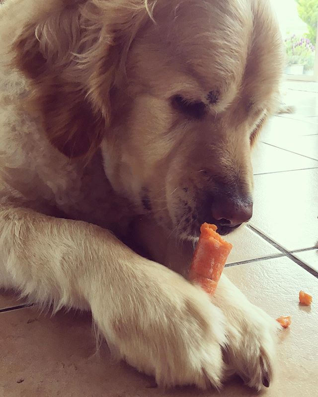 Nothing gets between him and his carrot. Those big sturdy paws become the most gentle tools that he uses to hold his snack ❤️ Now if only the humans of the house could look at carrots on their plates the way Tadhg does!