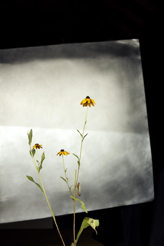 Field Flower 1