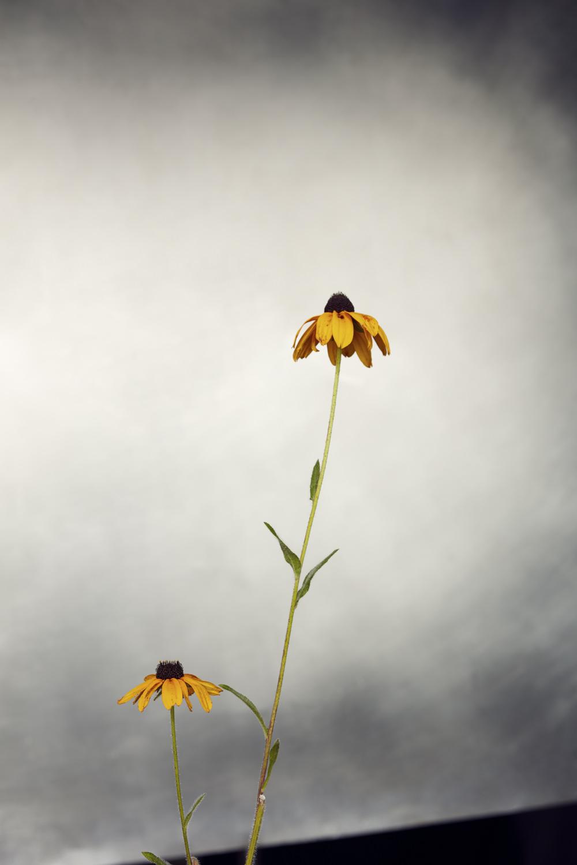 Field Flower 2