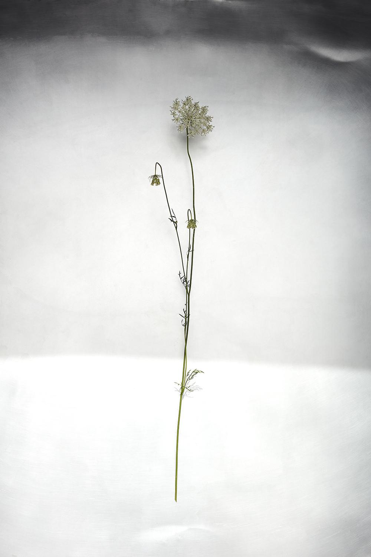Field Flower 3