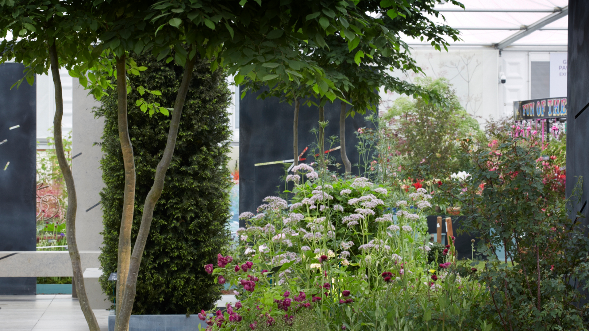 Our garden at the RHS Chelsea Flower Show 2019 -