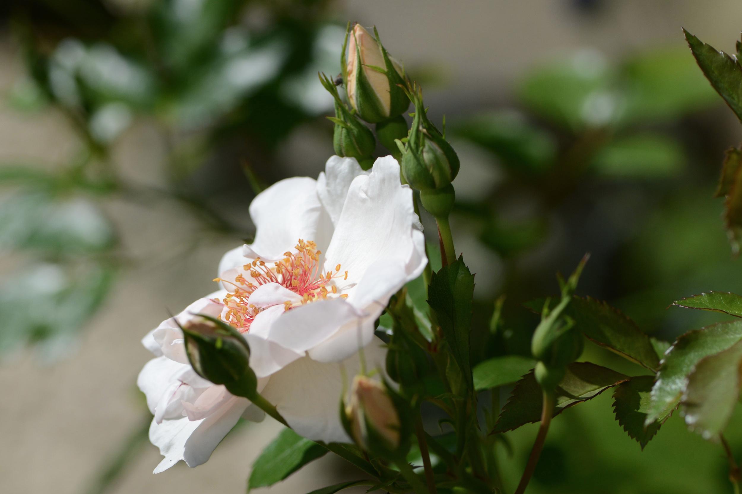 Front_Garden_-29.jpg