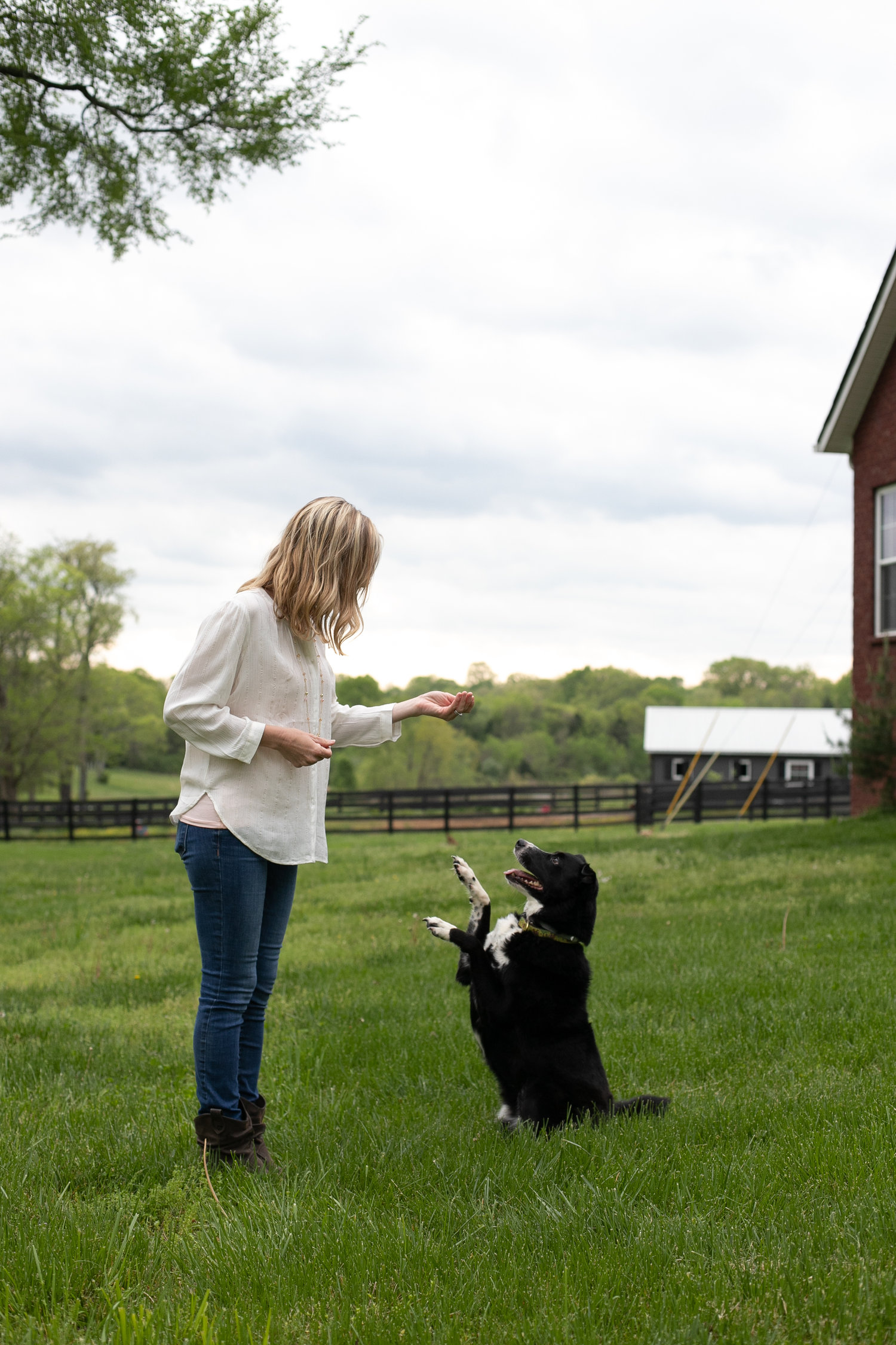 Training & Services — Wag it Better