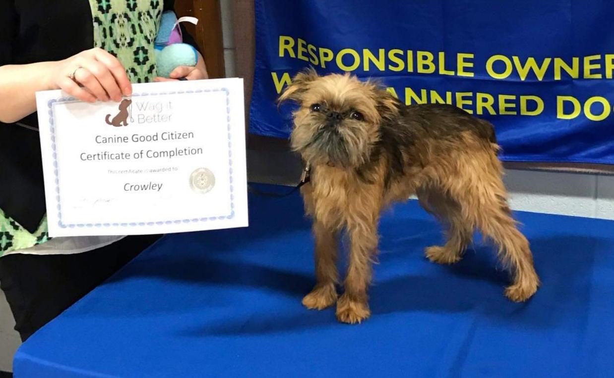 Crowley - Canine Good Citizen.jpg