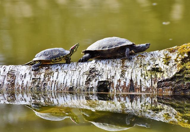 turtles on log_640.jpg