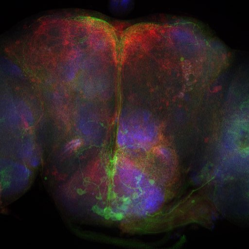 Neural signal integration in Drosophila - Decoding the biological basis of decision making at the molecular, cellular and circuit levels