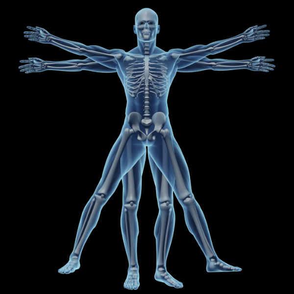 skeleton_med.jpg