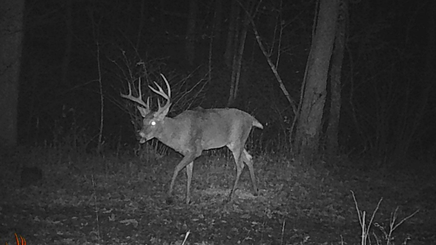 This big boy walked right past my stand…about 10 minutes after I left.
