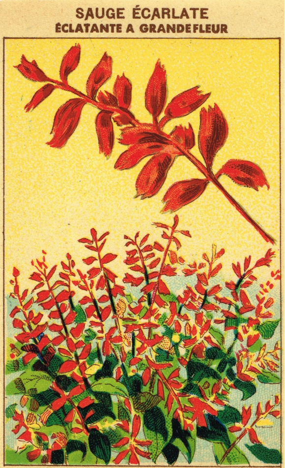 RedFlowerVintageSeedPacket.png