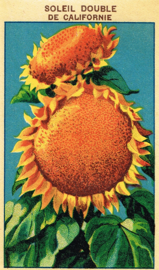 SunflowerVintageSeedPacket.png