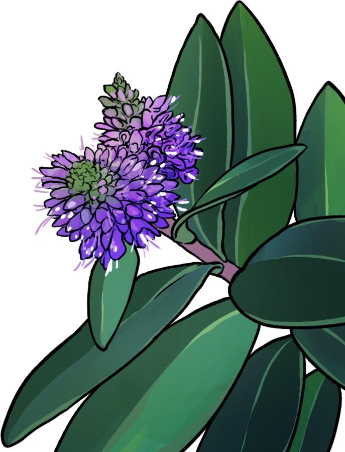 purple+flower.jpg