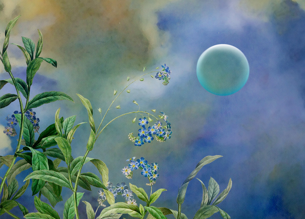 The moon looks upon many night flowers; the night flowers see but one moon. - Jean IngelowImage: Deidhre Wauchop 'Moon and forget-me-nots'