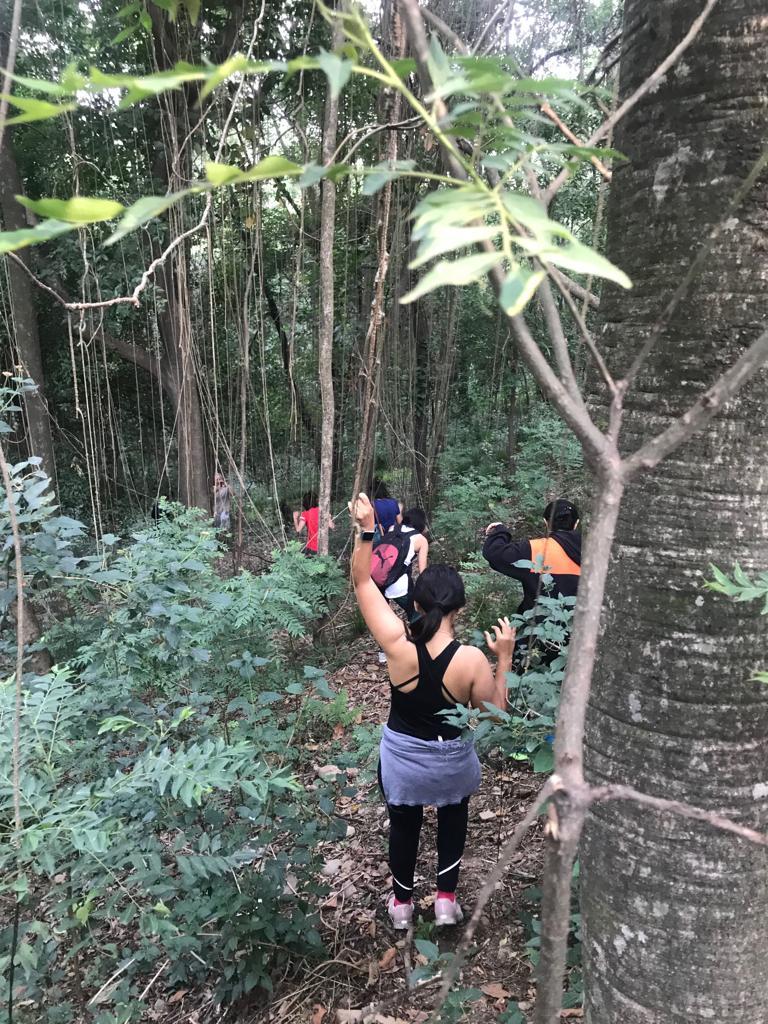 forest trek.JPG