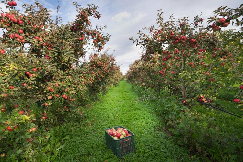 Farms -