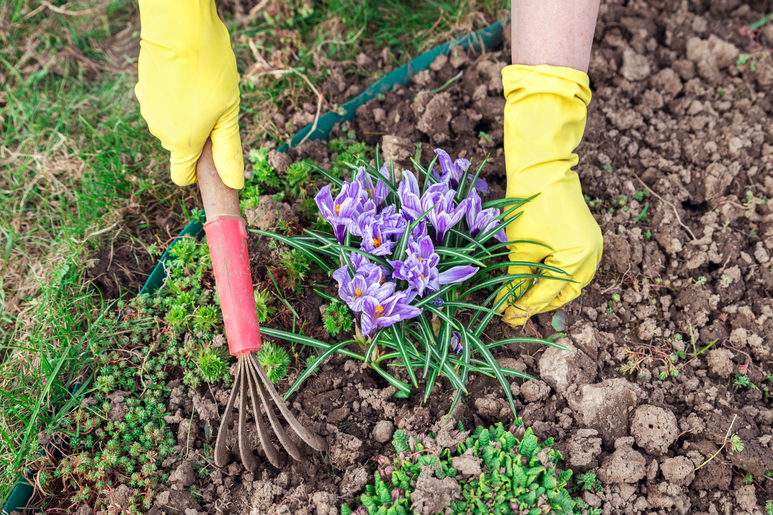 Tired of Pulling Weeds? - Wouldn't it be wonderful to spend this summer enjoying your gardens rather than maintaining them? Imagine a garden that only ever needs to be tilled once and never has to be weeded.