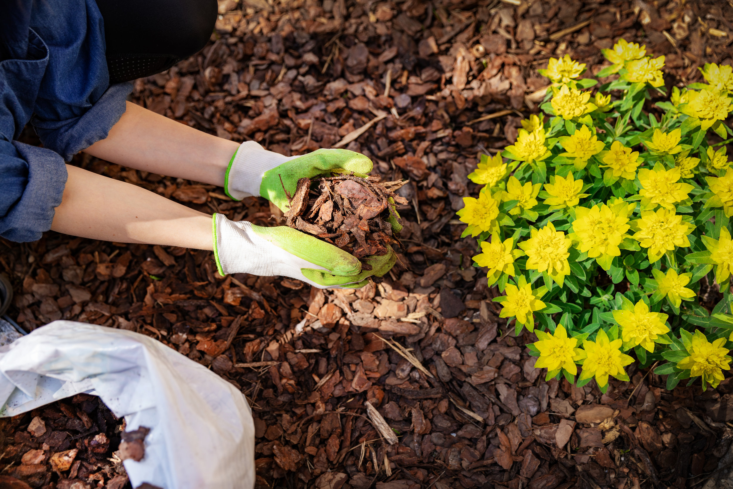 Tired of Mulching? - Not only is the Garden Tarp a more effective ground cover, you no longer have to re-mulch every year!