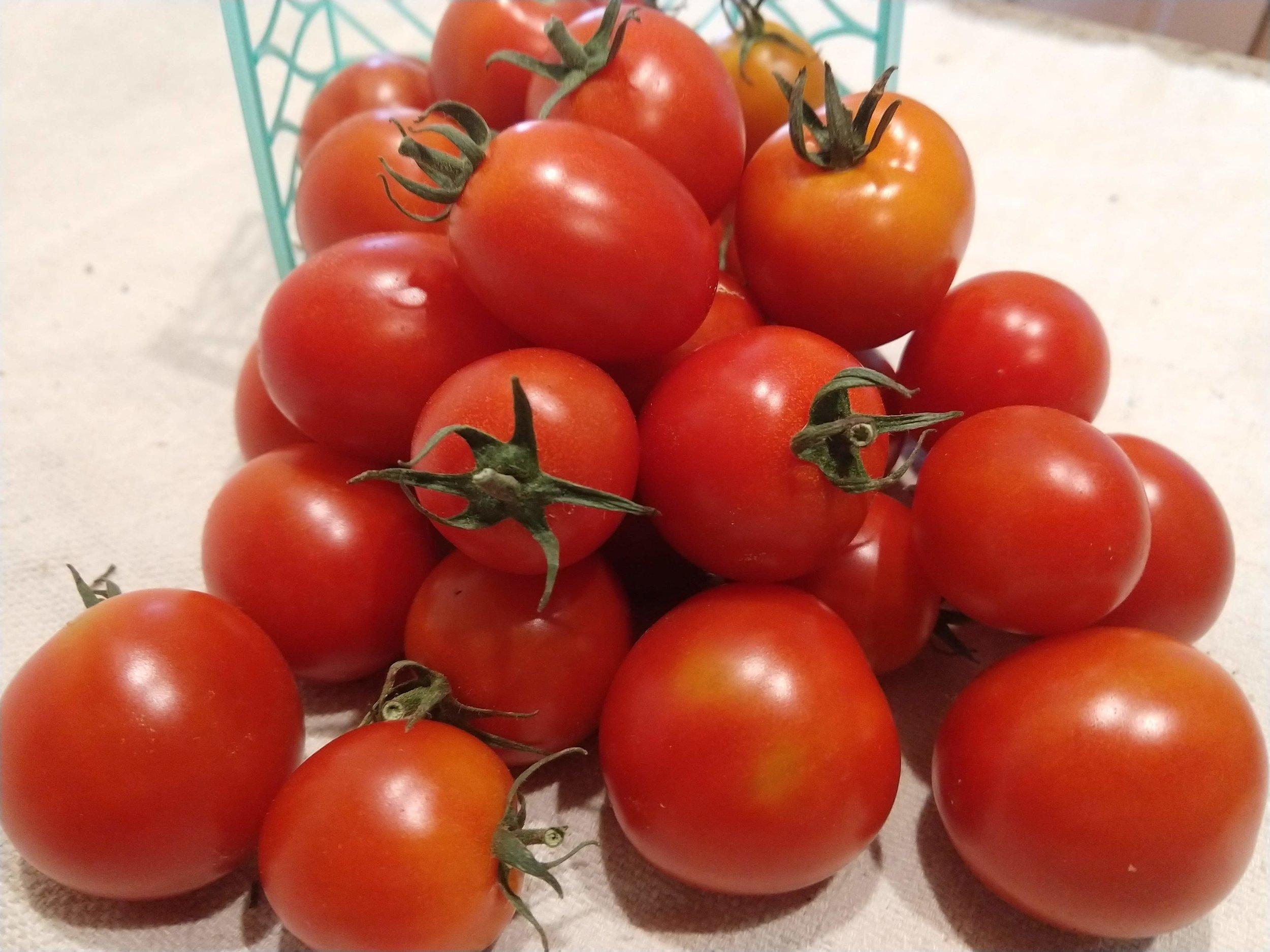 Larry Heidkamp - Tomato - Sakura.jpg