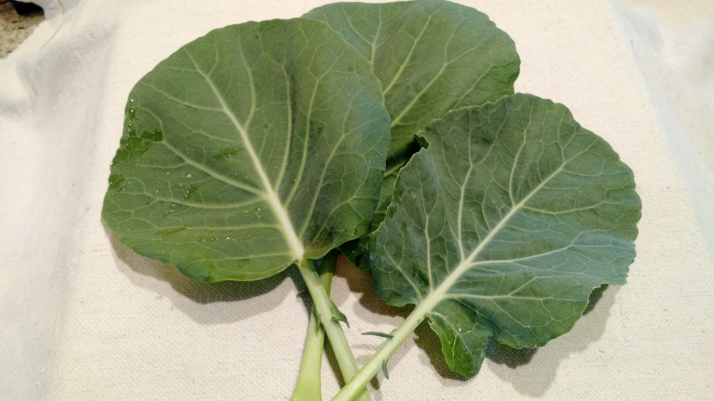 Larry Heidkamp - Collards - Flash.jpg