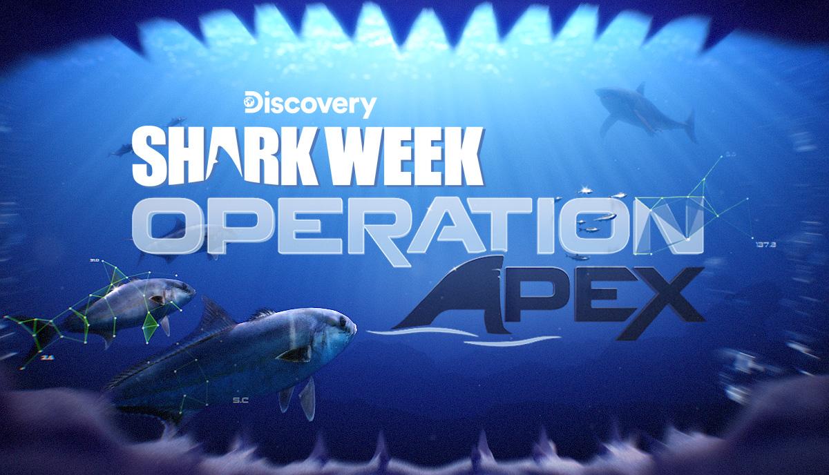 SharkWeeekOpApex_1.jpg