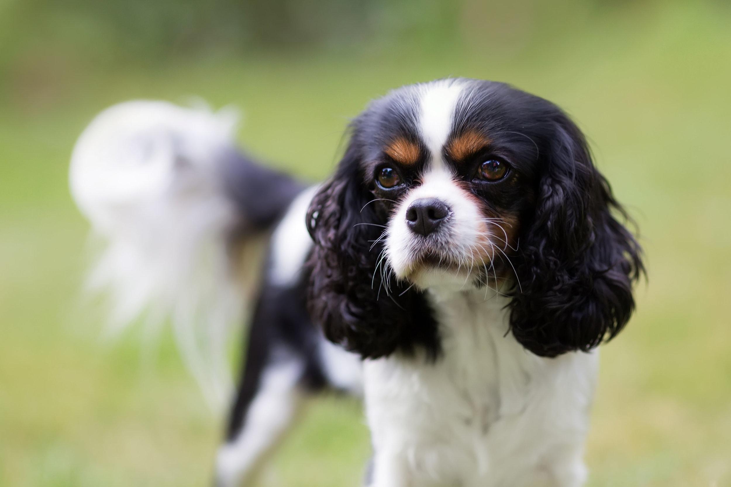 dog-portrait-P3QT56C.jpg