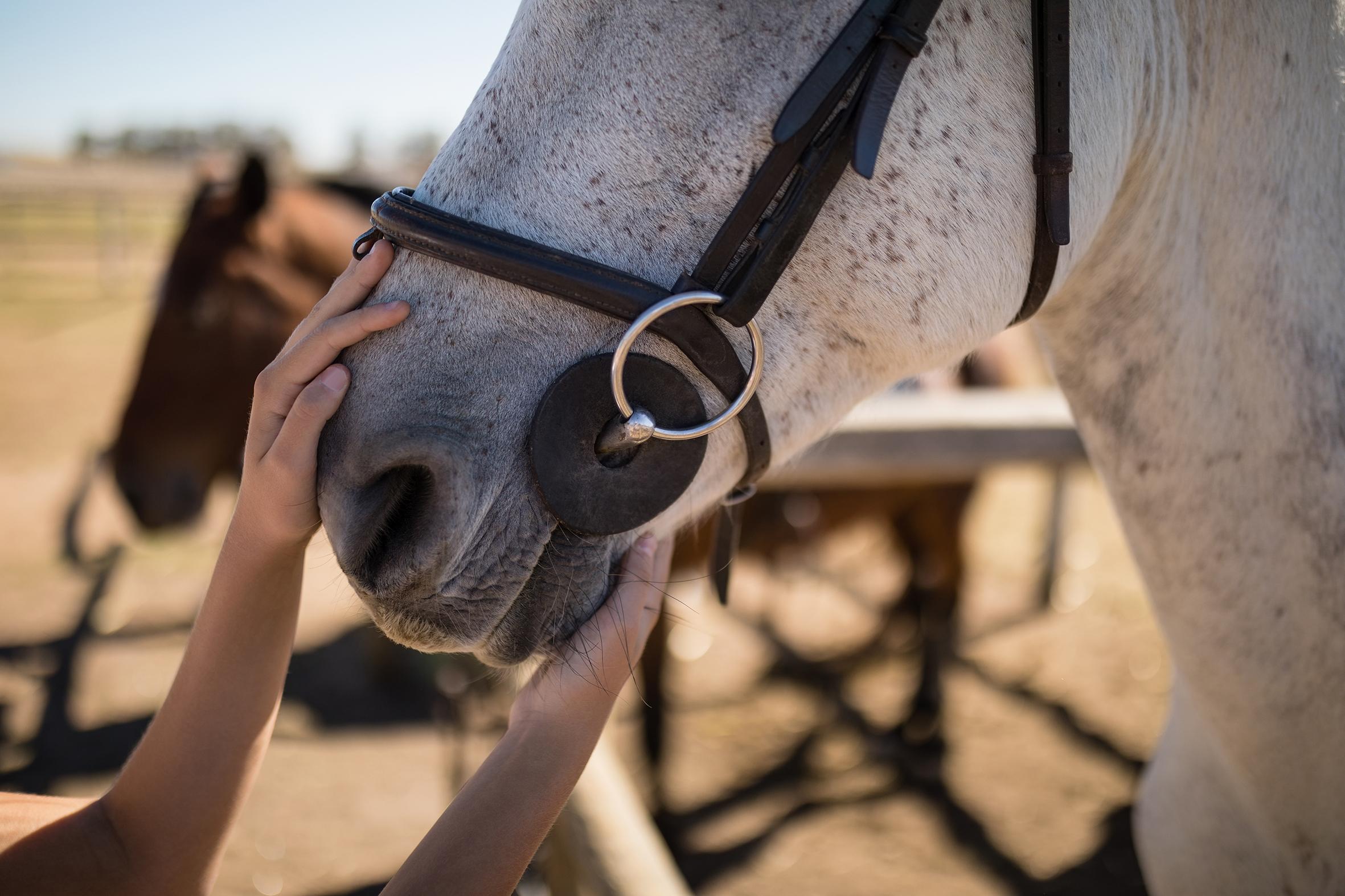white-horse-1.jpg