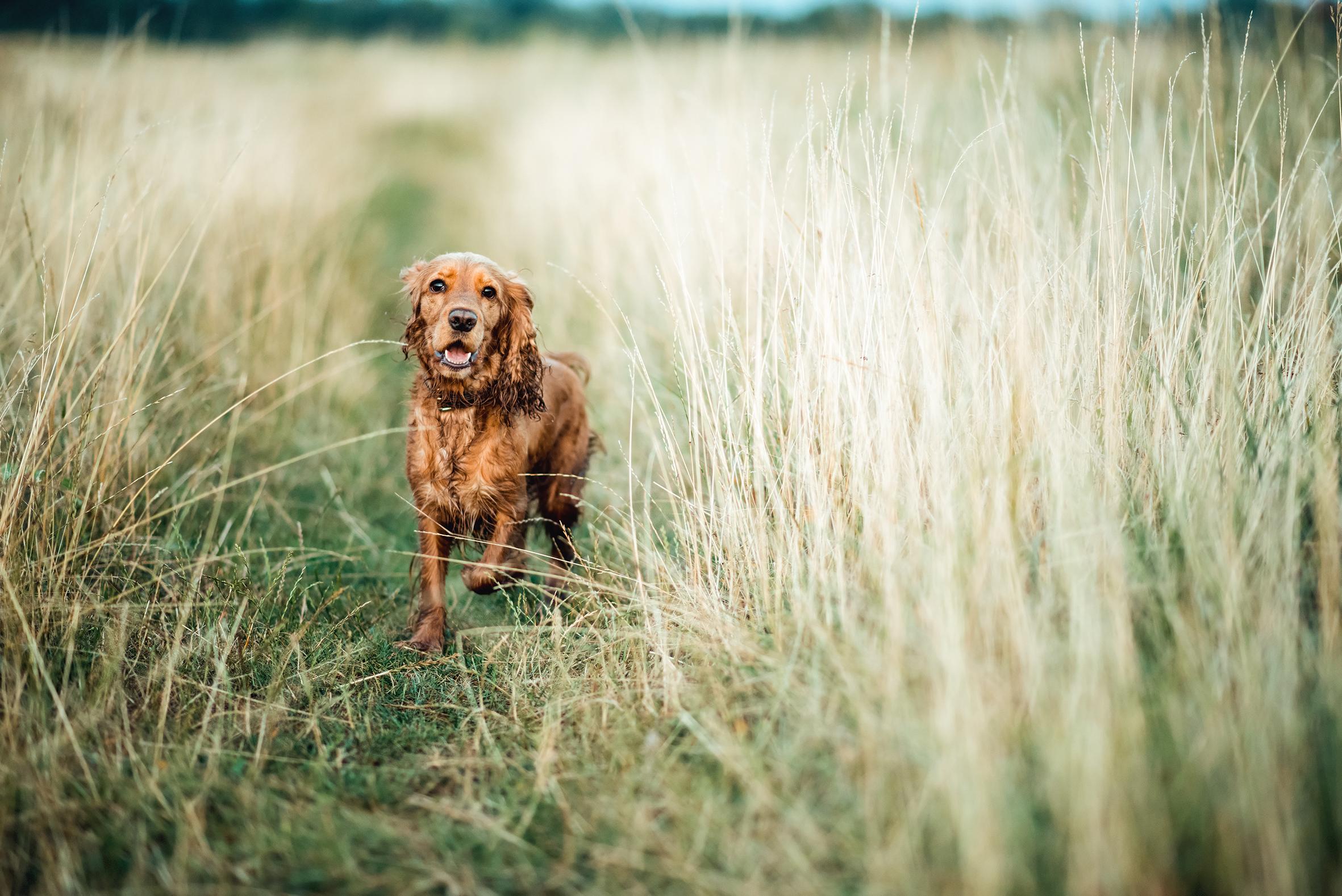 red-dog-1.jpg