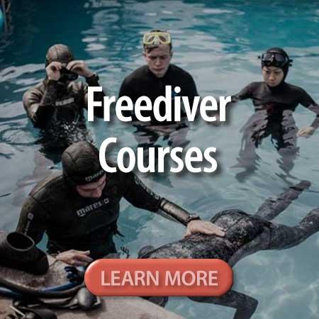 button_freediver_courses.jpg