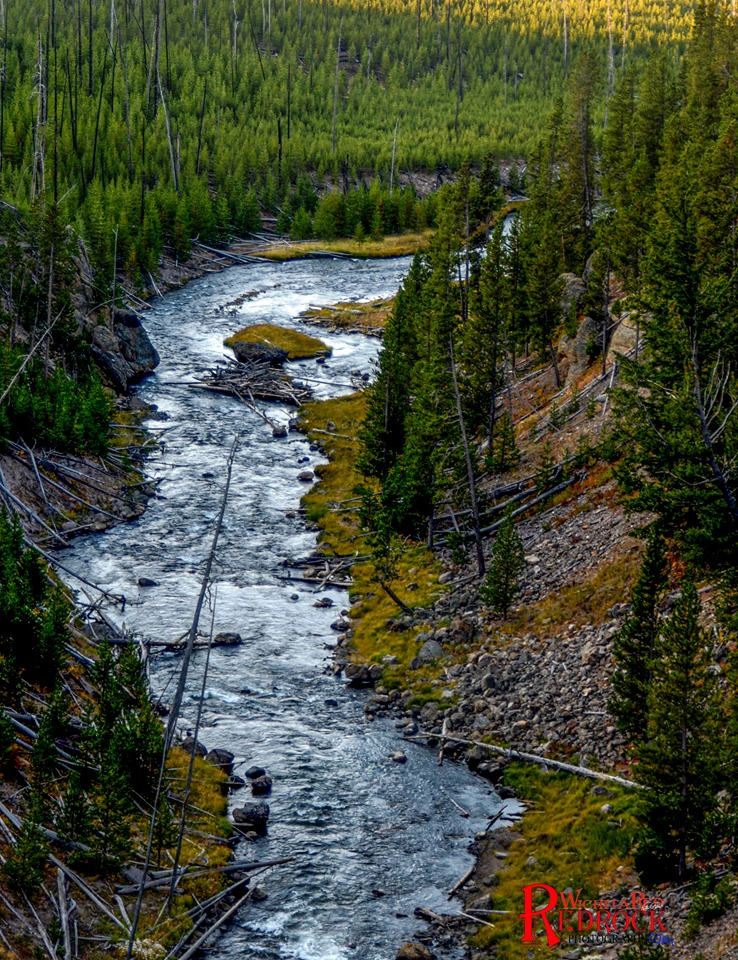stream and trees.jpg