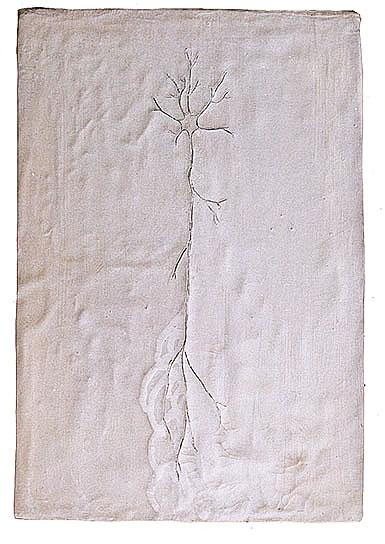 Neurona planta   42 x 60 cm.