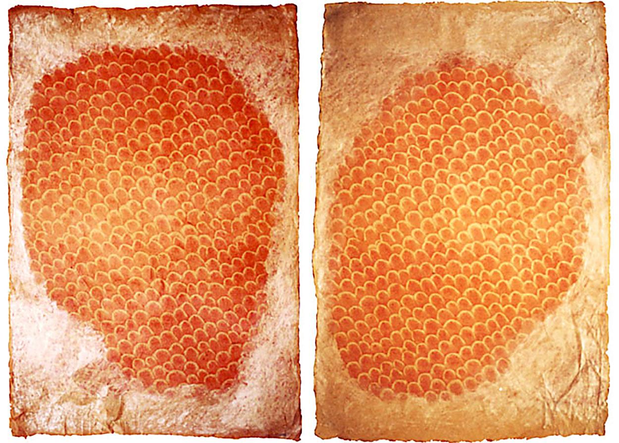 Pétalos de Gladiolo     Digital print & pastel on on hand made nepalí paper. 52 x 77 cm each.