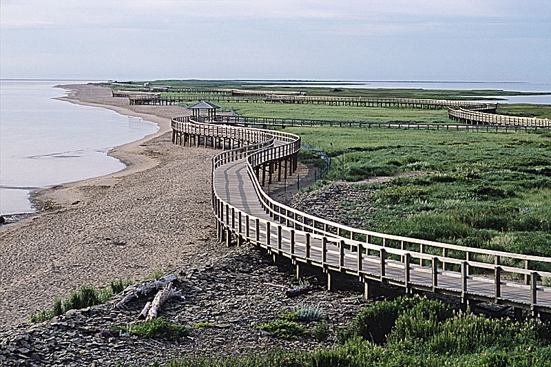 The dunes in bouctouche are only 30kms north and is a great way to explore our shore line.