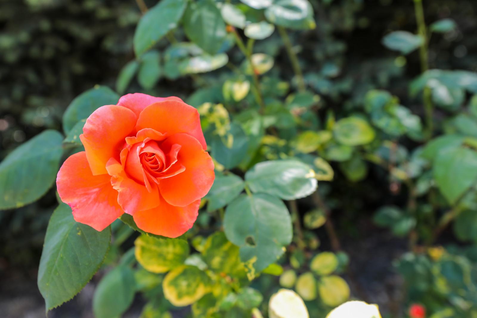 22 Amber Blu Skye Media-1232-X3.jpg