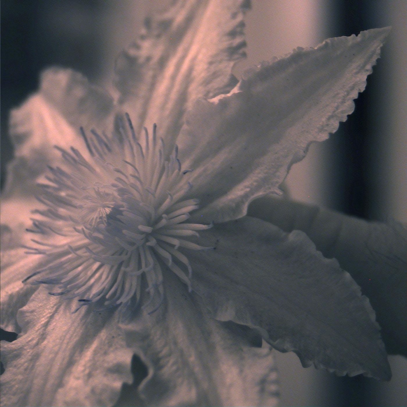 UV_flower_2.jpg
