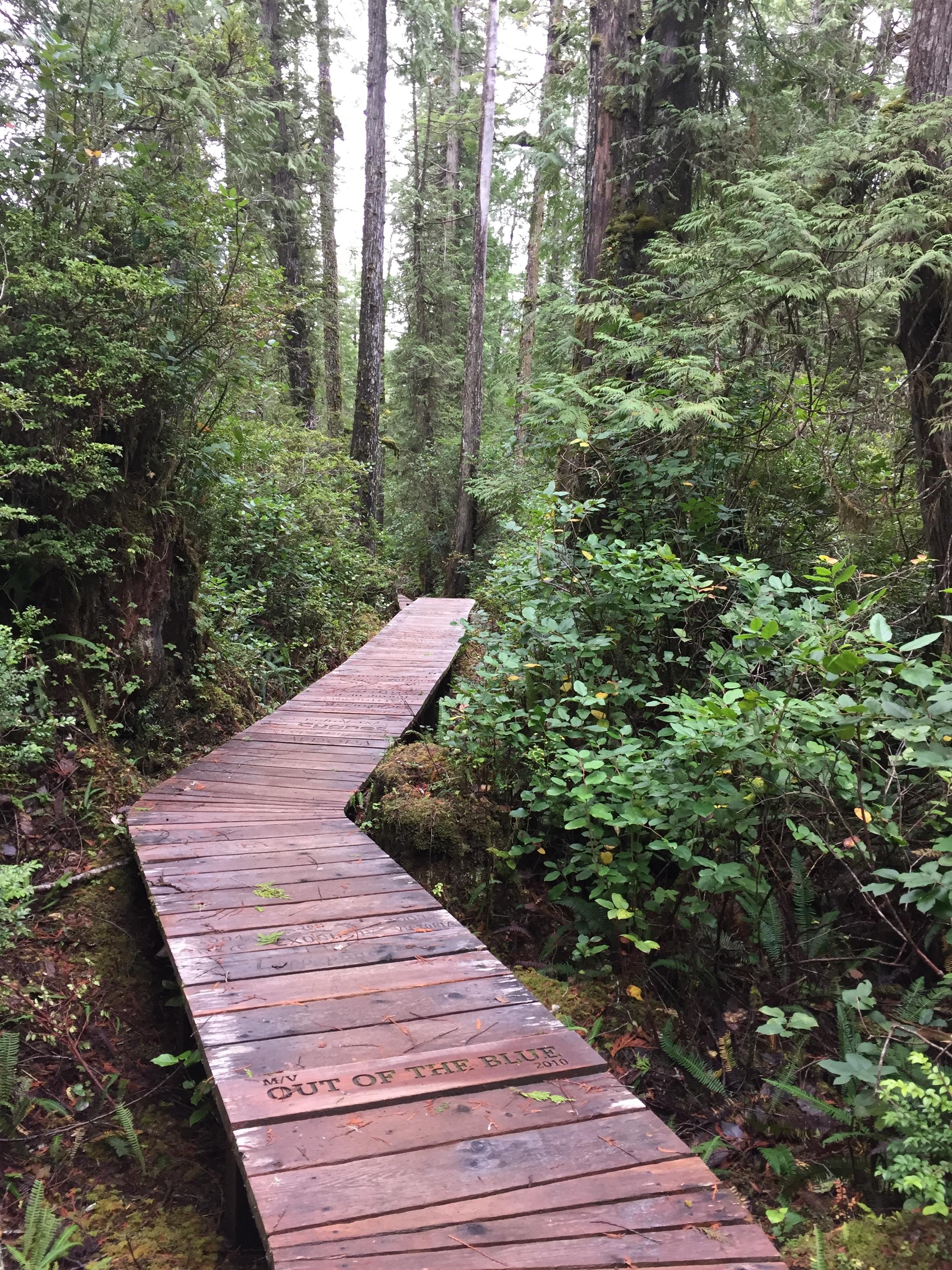 hcv forest.jpg