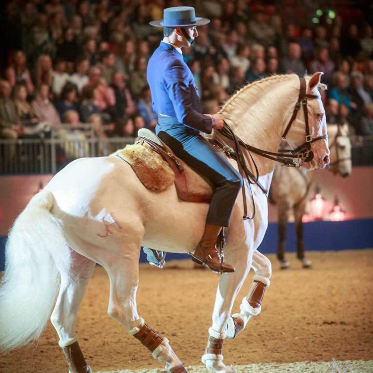 luis equestrian portugal leadequestrian leadwealth.jpg