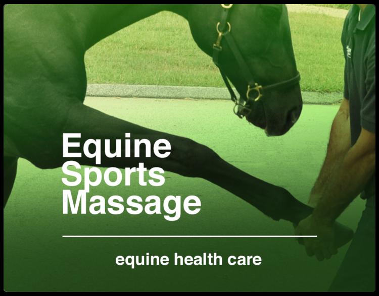 EQUINE+SPORTS+MASSAGE.png