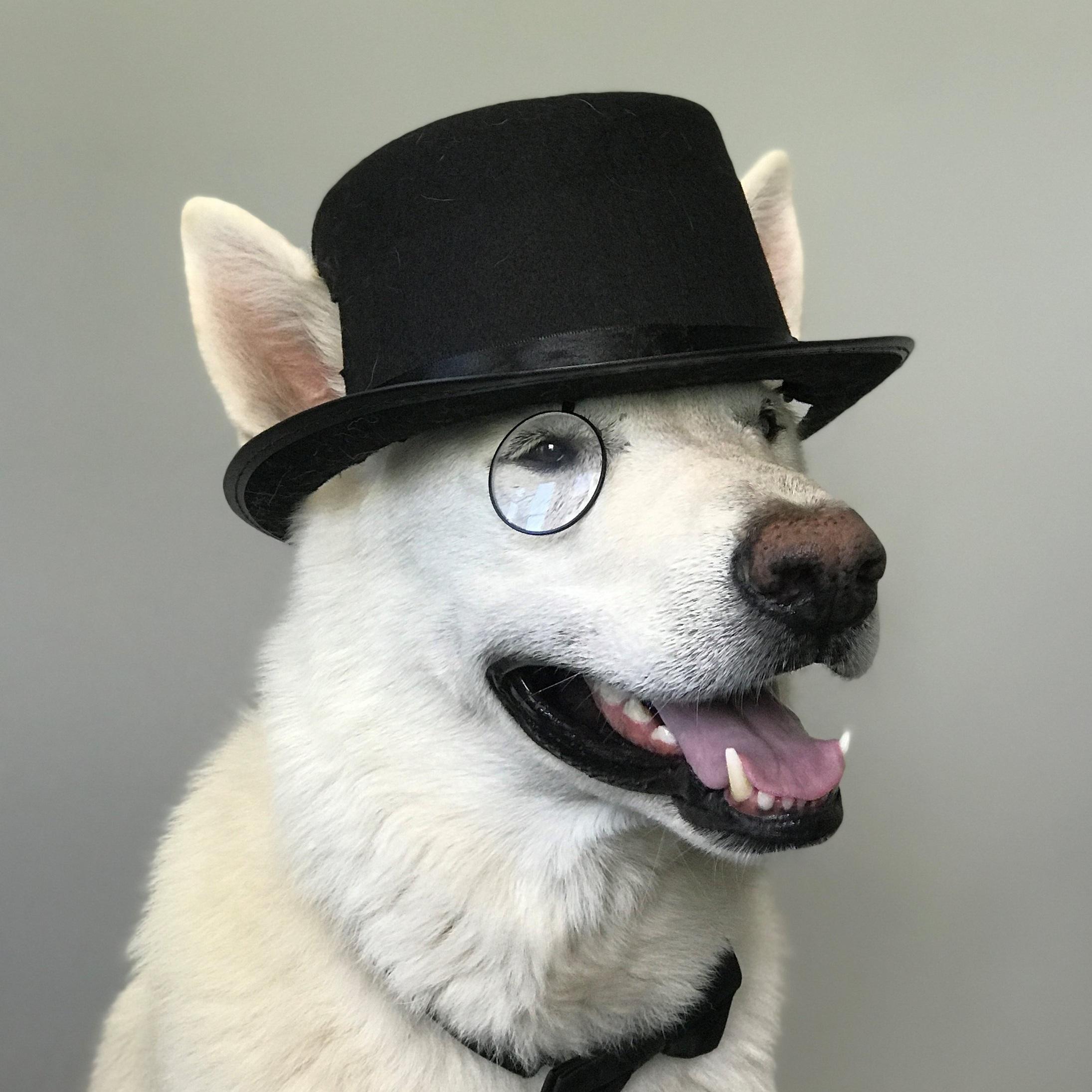 Baloo_Professional.jpg