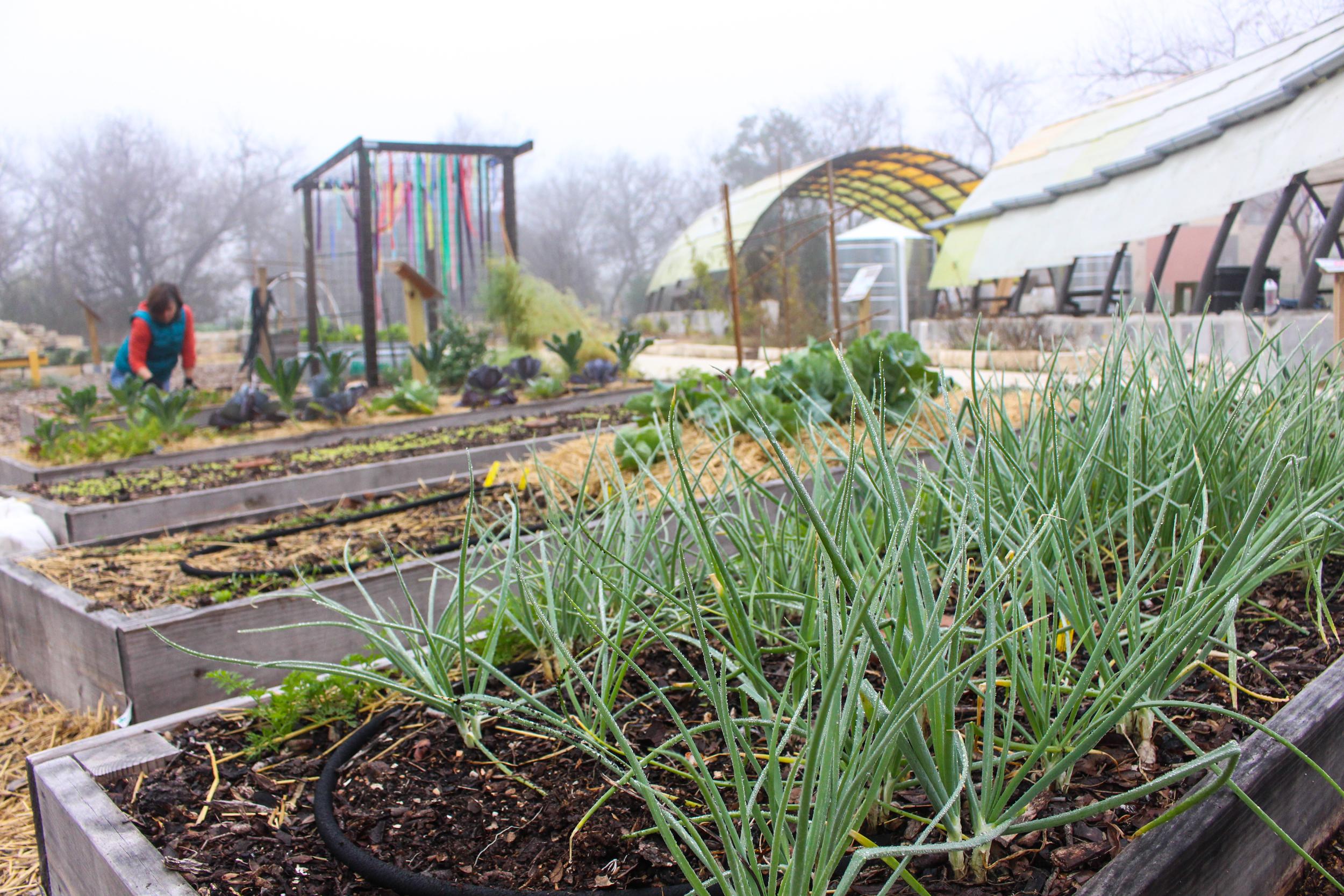 Austin Edible Gardens