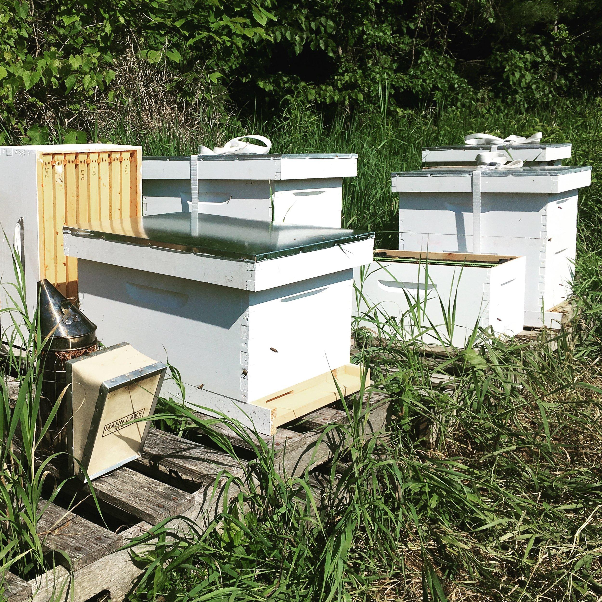 Alchemy Farm apiary