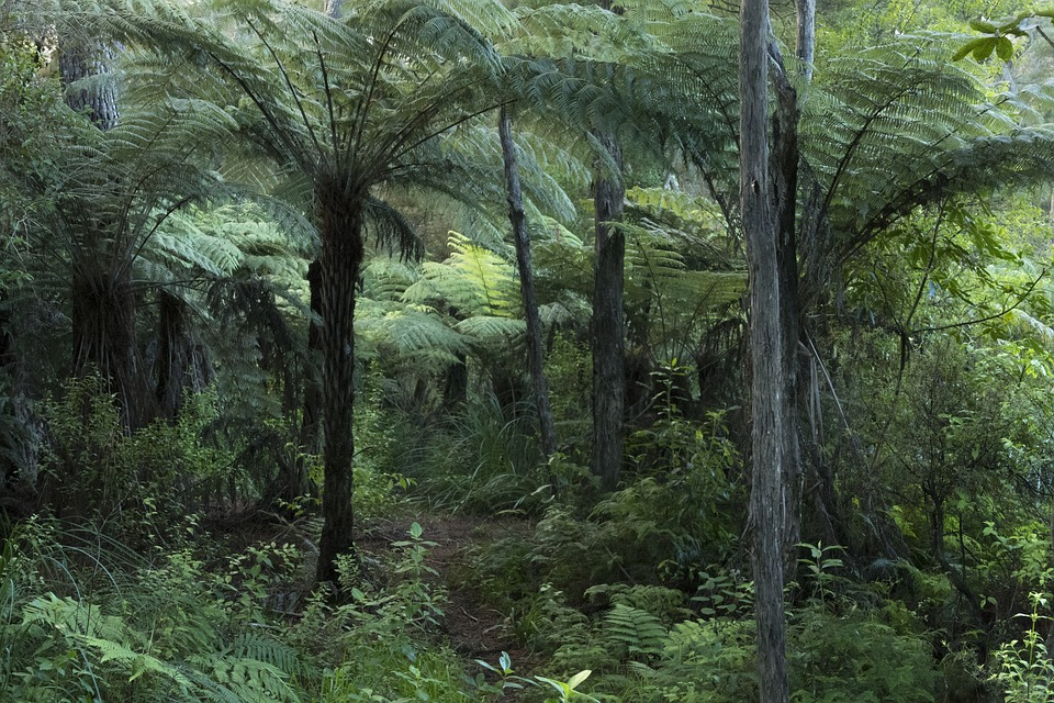 forest-3729279_960_720.jpg