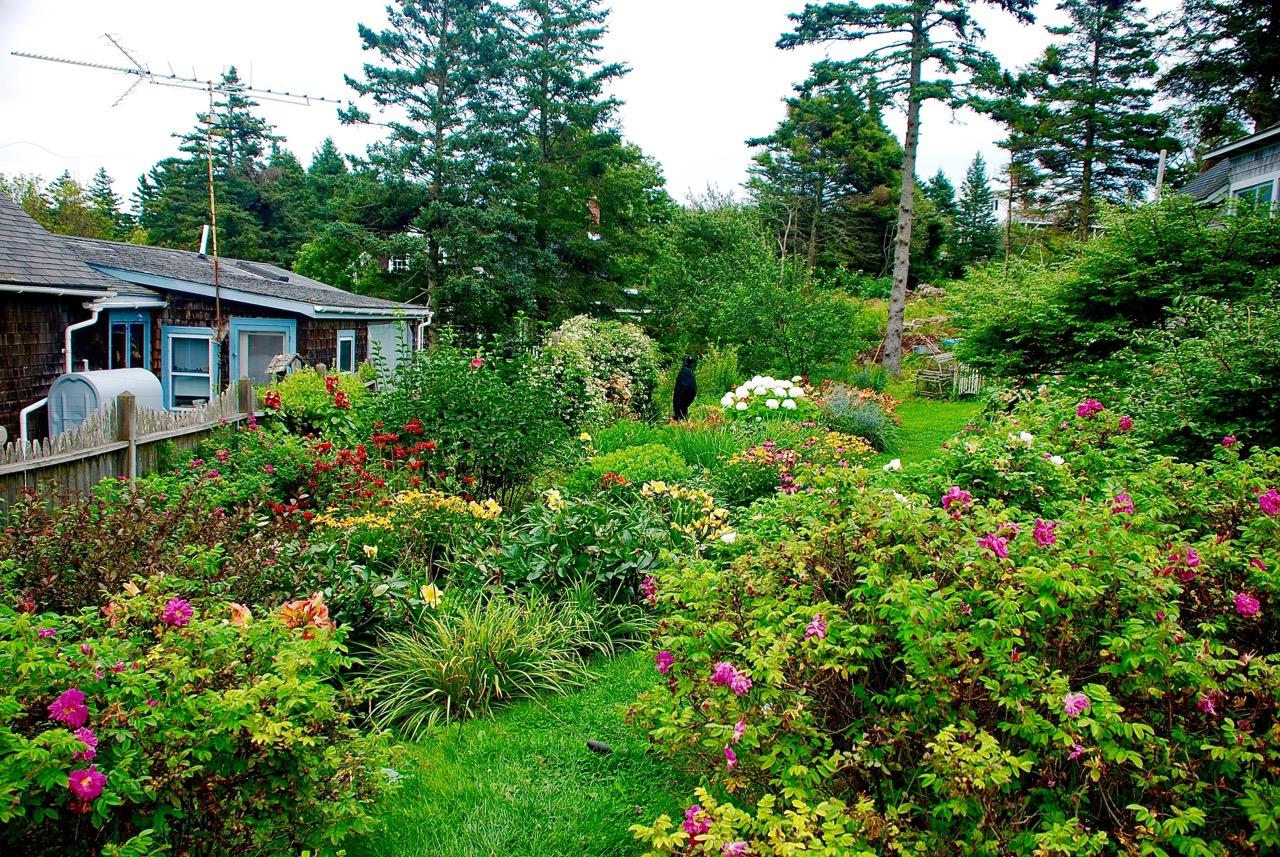 Flowers backyard.jpeg