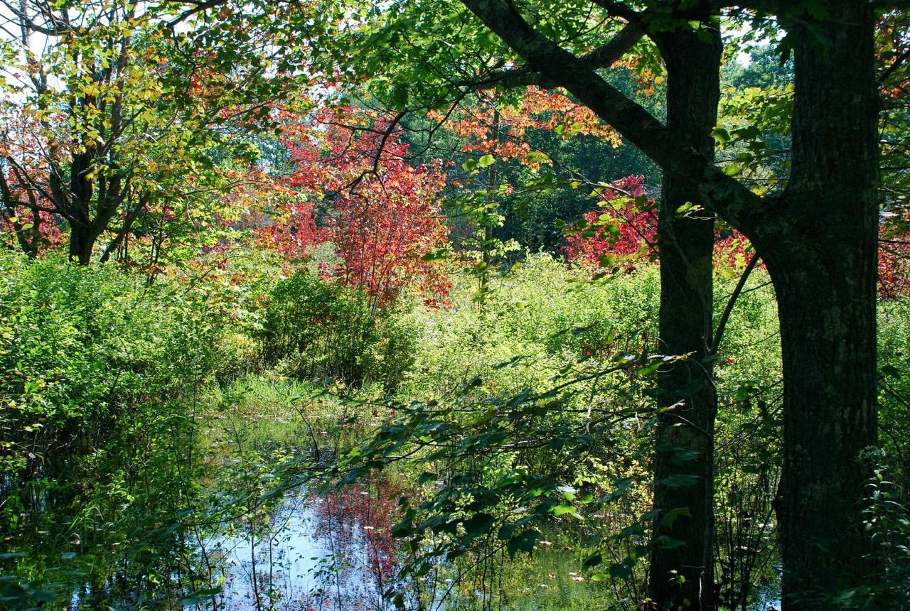 Trees stream.jpeg