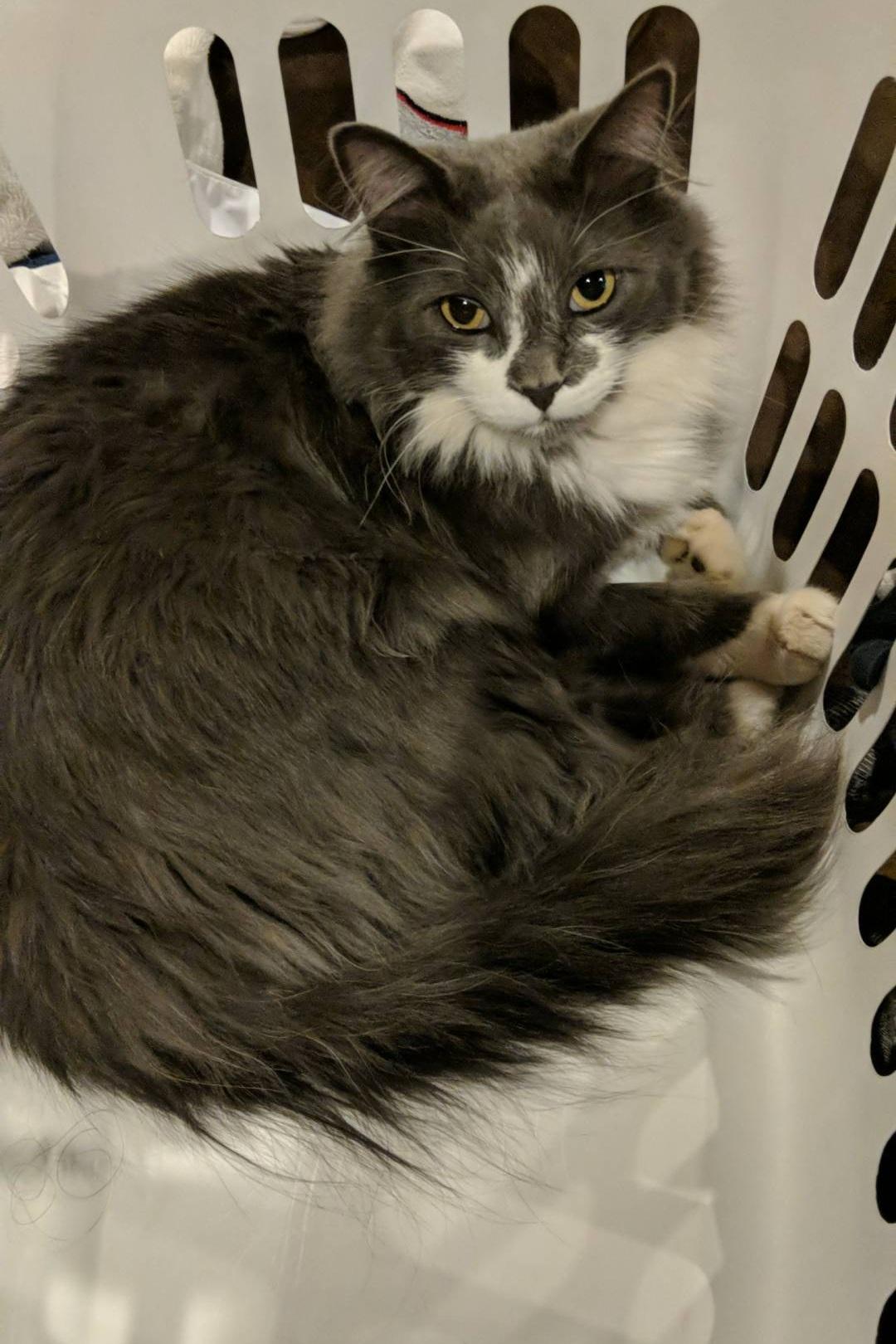 Paulie in a basket