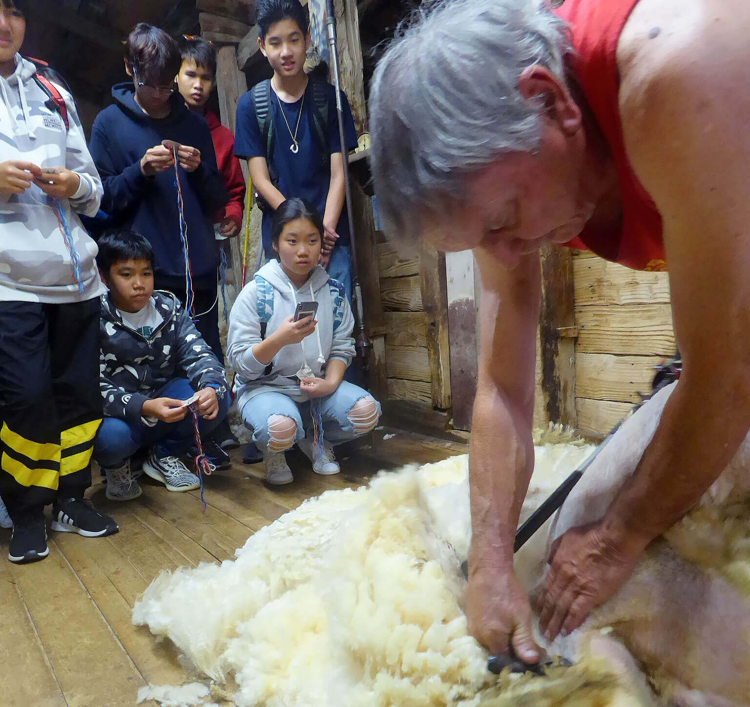 Graham Checkley shearing demo square tinypng 20190503.jpg