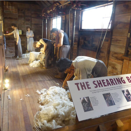 Shearing board sq.jpg