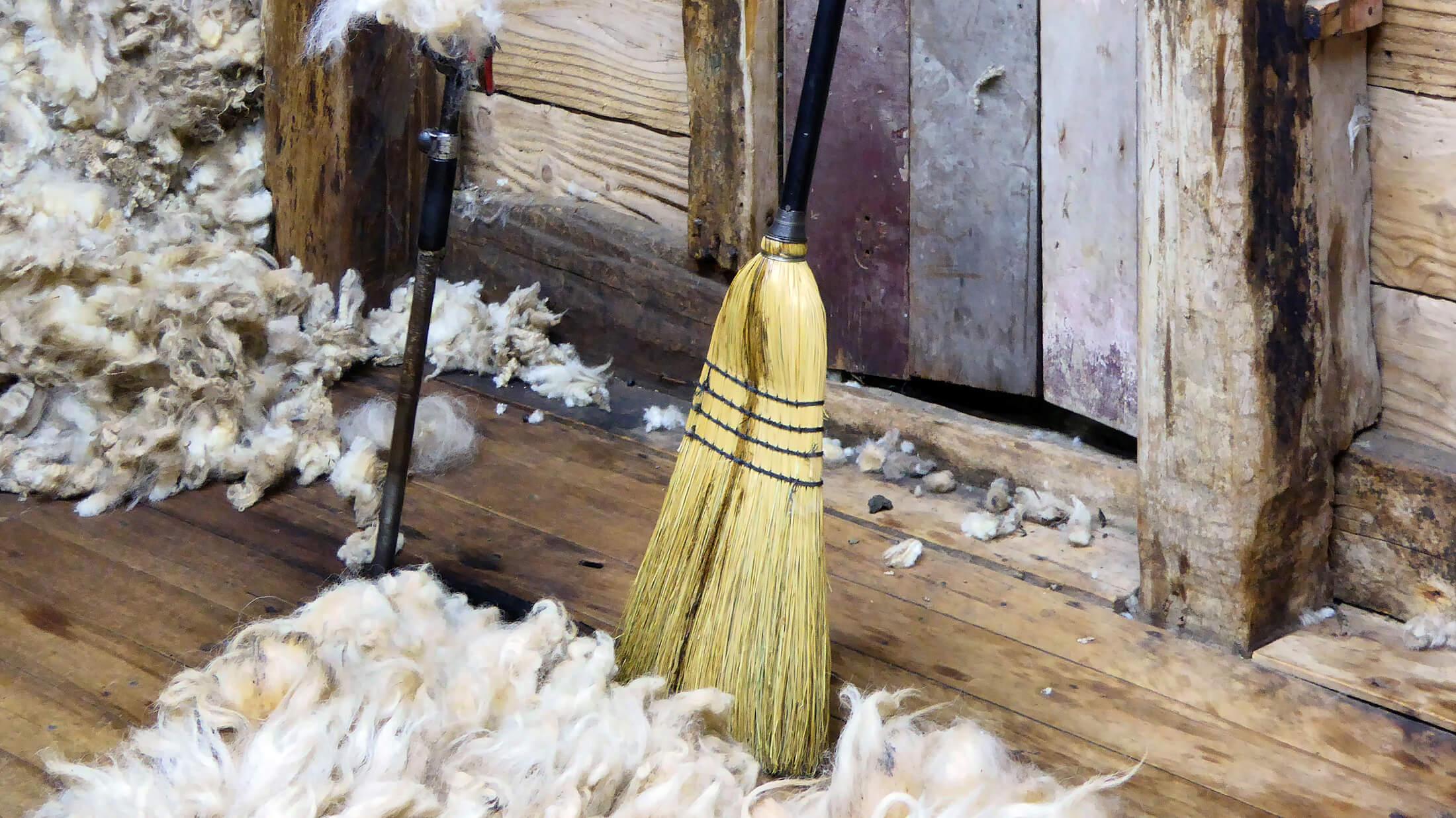 Roselea broom.jpg