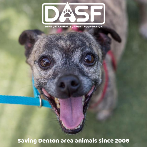 Denton Animal Support Foundation (DASF) - DASF is a non-profit organization supporting the city of Denton animal shelter & other animal initiatives through fundraising, marketing & education. DASF does NOT operate the shelter and is not a rescue organization.